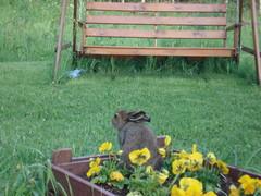 Pupu kukkalaatikossa