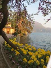 Kukkaloistoa Luganon järven rannalta