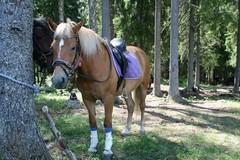Liina, myös omalla hevosellaan voi osallistua maastoomme :)