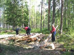Puiden karsintaa
