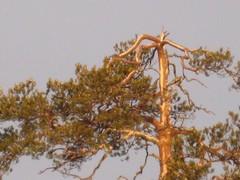 luonto016