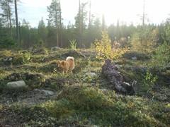 Nuori metsästäjä ja koira