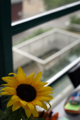 Aurinkokadun akkuna
