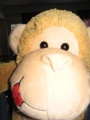 Apina on kiva halikaveri