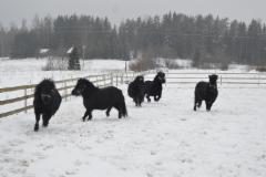 mustat ponit nauttii