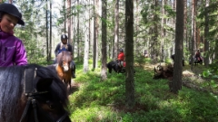 Ponit metsässä
