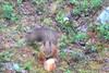 Oravan herkkuhetki