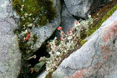 Elämää kivikossa