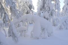 Lumihahmoja Luostolla
