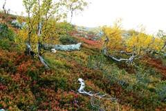 Ruskaa Ukko-Luoston rinteillä