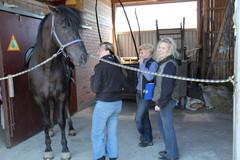 Homeopaatti Marika Kuoppala ja ratsuttaja Tiina Koski tutkimassa hevosta