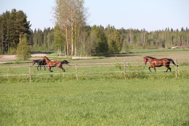 laidun_27.5.2012_078