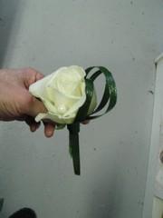 Rintakukka, ruusu 12 e