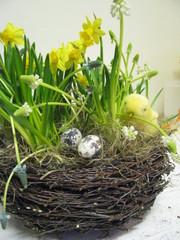 Koivunoksapesä keväisille sipulikukille.