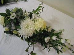 Krysanteemeja, eustomaa