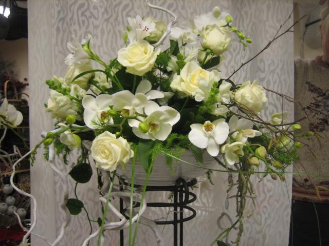 Tilakoriste orkidea-ruusu