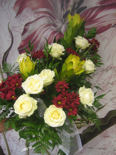 surukimppu ruusu-hopeapuu