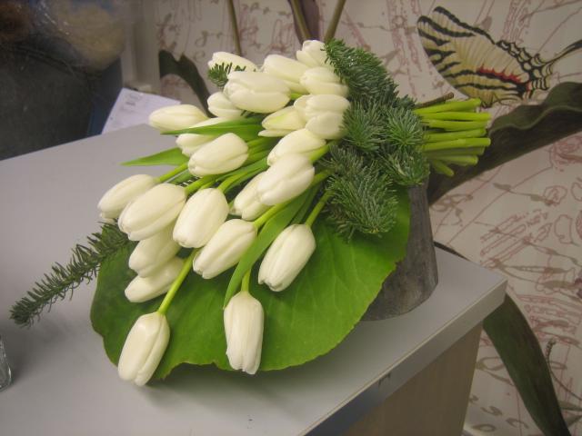 surukimppu valkoiset tulppaanit