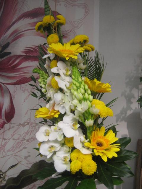 Orkidea gerbera, Valoisa