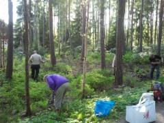 Metsätöiden jälkien siivousta