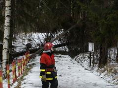 Kaatuneen puun raivausta