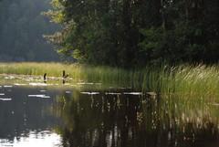 Salmijärveltä