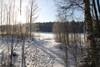 Niinimetsän rantaa talvella