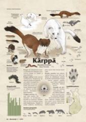 lajikortti_karppa
