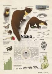 lajikortti_naata