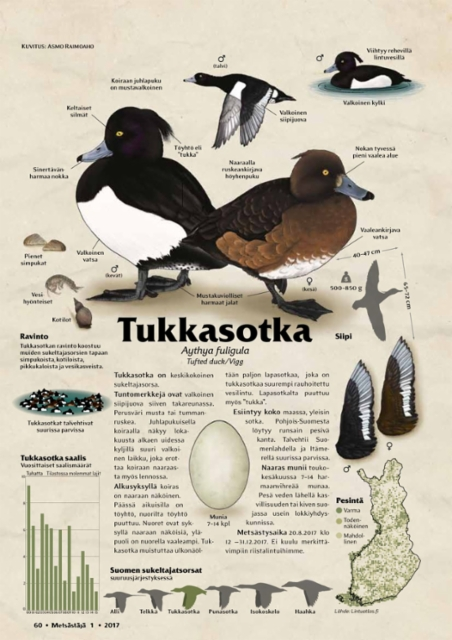 lajikortti_tukkasotka