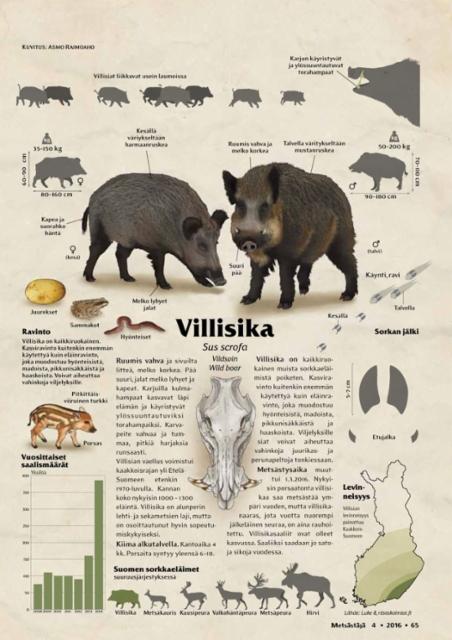 lajikortti_villisika_0