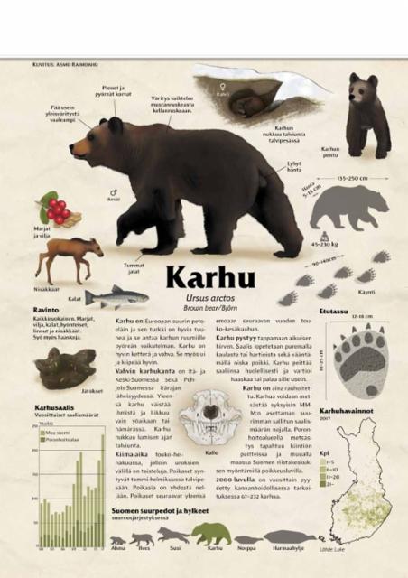 lajikortti_karhu