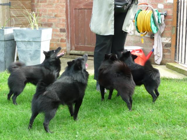 Mandy ja koirat (Annie, Chester, Babs ja Hattie)