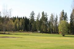 golf 335