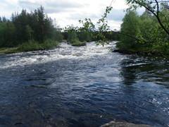 Bearbeat Medvetsa ja Kolajoen yhtymäkohta