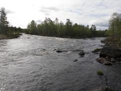 Kola ja Medvetsa jokien yhtymäkohta Bear Beat