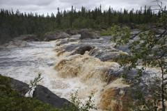 Köngäs tulvavedellä