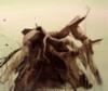 Home(Wings) / Koti(Siivet) II, 2020 oil and acrylics 50x60cm