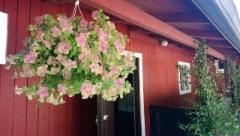 Tahostenniemen kukkaloistoa. Kuva. Anna-Liisa Huhtala