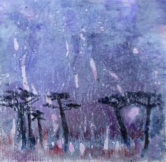 Akaasiapuita Afrikassa