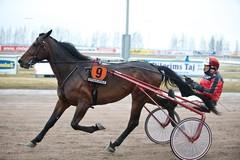 Like di Poggio / Airaksinen 13_04_13 (kuva:Vehkala Mika)