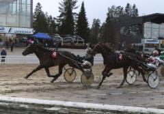 Tornapull/ Markku Nieminen Kasvattajakruunu (c) Ilkka Nisula