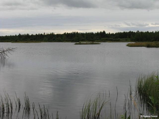 Hirvinevan lintujärvi