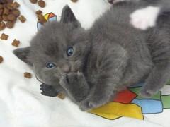 Sininen poika 11.9.2011