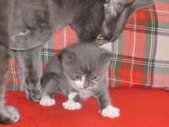 Liisi-emo hoivaa sinivalkoista poikaansa 11.9.