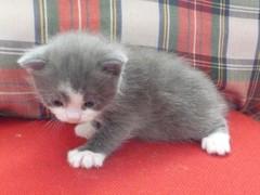 Sinivalkoinen poika 11.9.2011