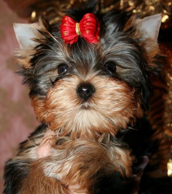 Magic Minidog Love Story