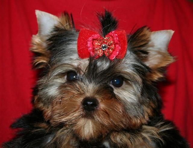 Magic Minidog Nightwish