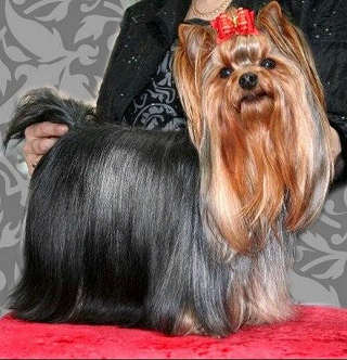 Magic Minidog Pretty Me Ronia, om. Tuija Aronen