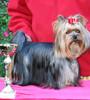 Magic Minidog Olivia